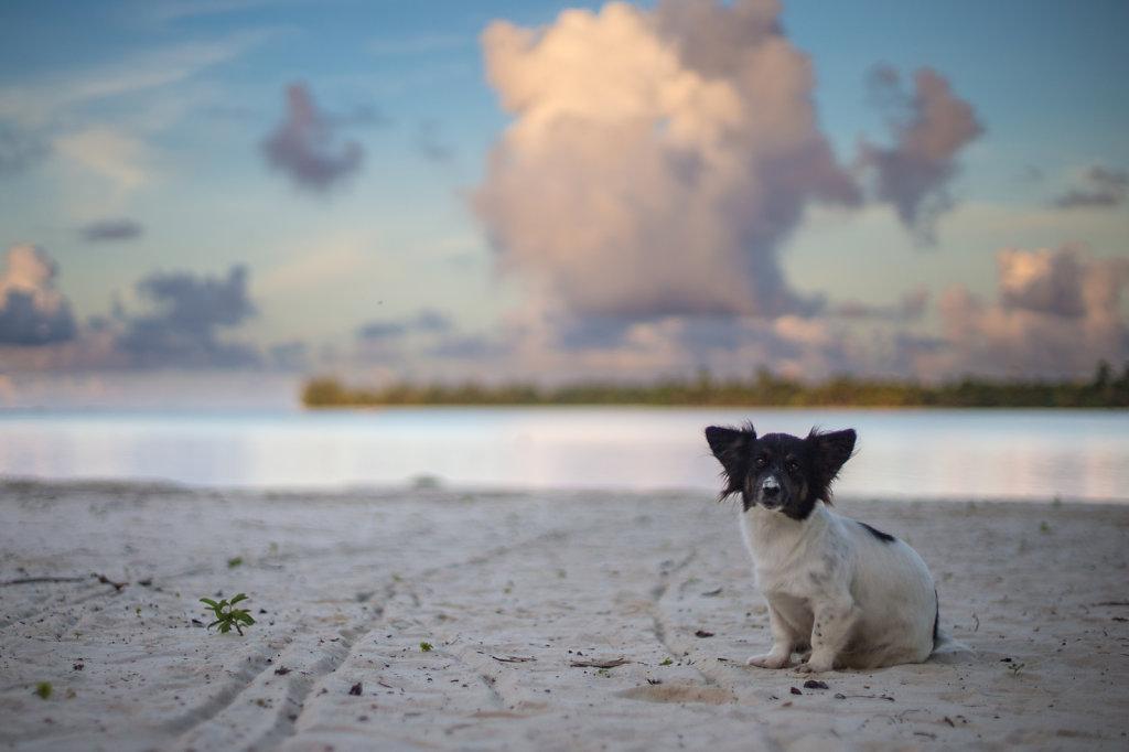 Maupite, French Polynesia (2014)